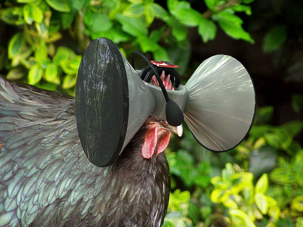 http://www.secondlivestock.com/images/chicken_vr.jpg